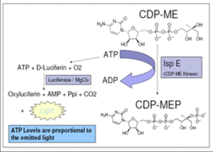 CDP-MEP Synthesis Kit - Echelon Biosciences