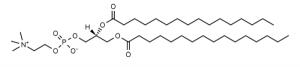 1,2-Dipalmitoyl-sn-glycero-3-phosphocholine (DPPC) - Echelon Biosciences