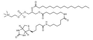 Biotin-Phosphatidylcholine - Echelon Biosciences