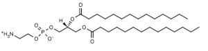 1,2-Dimyristoyl-sn-glycero-3-phosphoethanolamine (DMPE) - Echelon Biosciences