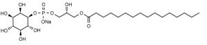 1-Palmitoyl-2-hydroxy-sn-glycero-3-phosphoinositol (LysoPI, 16:0 LPI) - Echelon Biosciences
