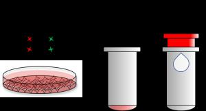 ExoClean, Exosome Purification Kit - Echelon Biosciences