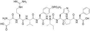 Tyr(PO3H2)4 Angiotensin II, human - Echelon Biosciences