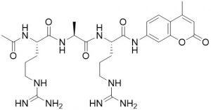 Ac-Arg-Ala-Arg-AMC, fluorogenic substrate for trypsin activity - Echelon Biosciences