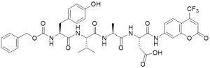 Z-Tyr-Val-Ala-Asp-AFC (Caspase 1 Substrate) - Echelon Biosciences