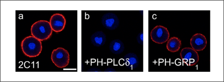 Lipid binding ICC controls - Echelon Biosciences