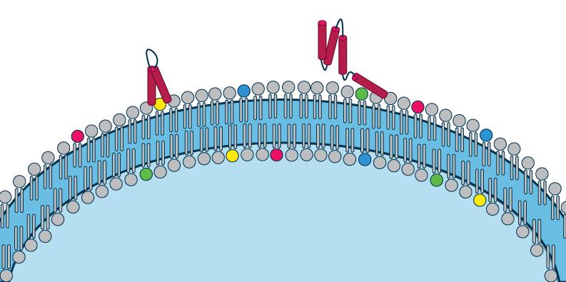Tips and tricks for your PIP Strip protocol - Echelon Biosciences