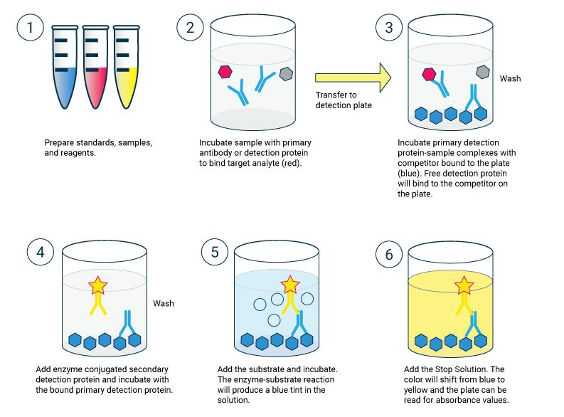 Competitive ELISA flow chart - Echelon Biosciences